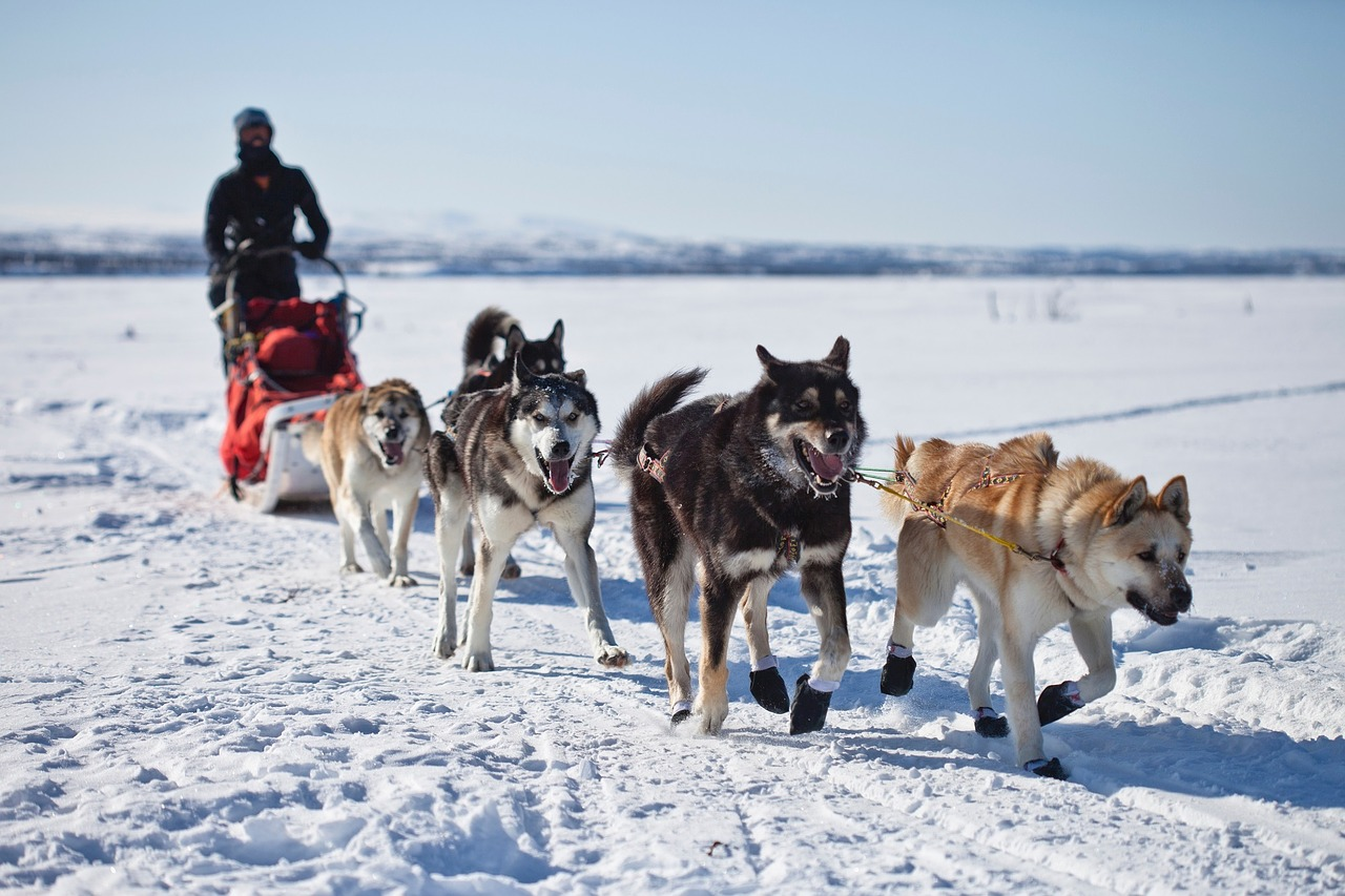 Dogs,sled,team,dogsled,teamwork - free image from needpix.com