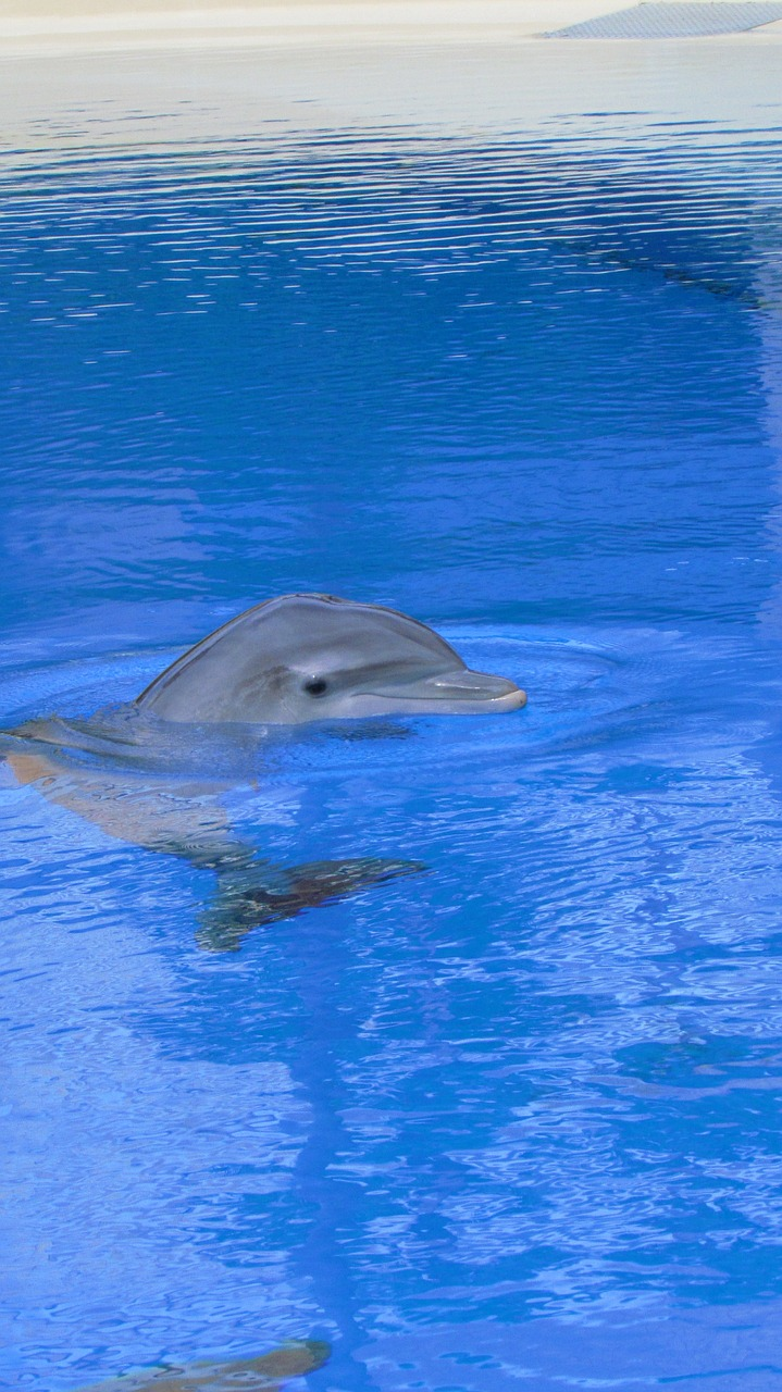 dolphin fish dolphins free photo