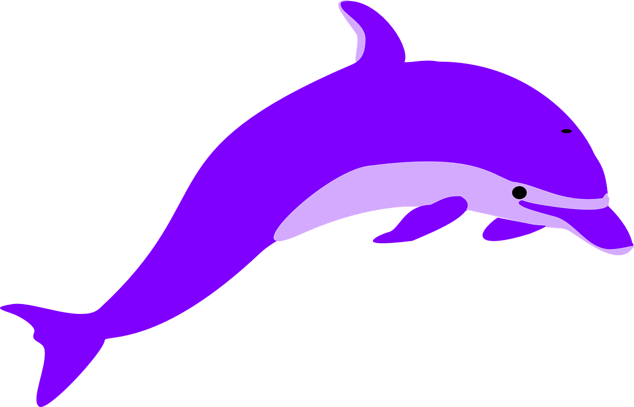 dolphin porpoise mammal free picture