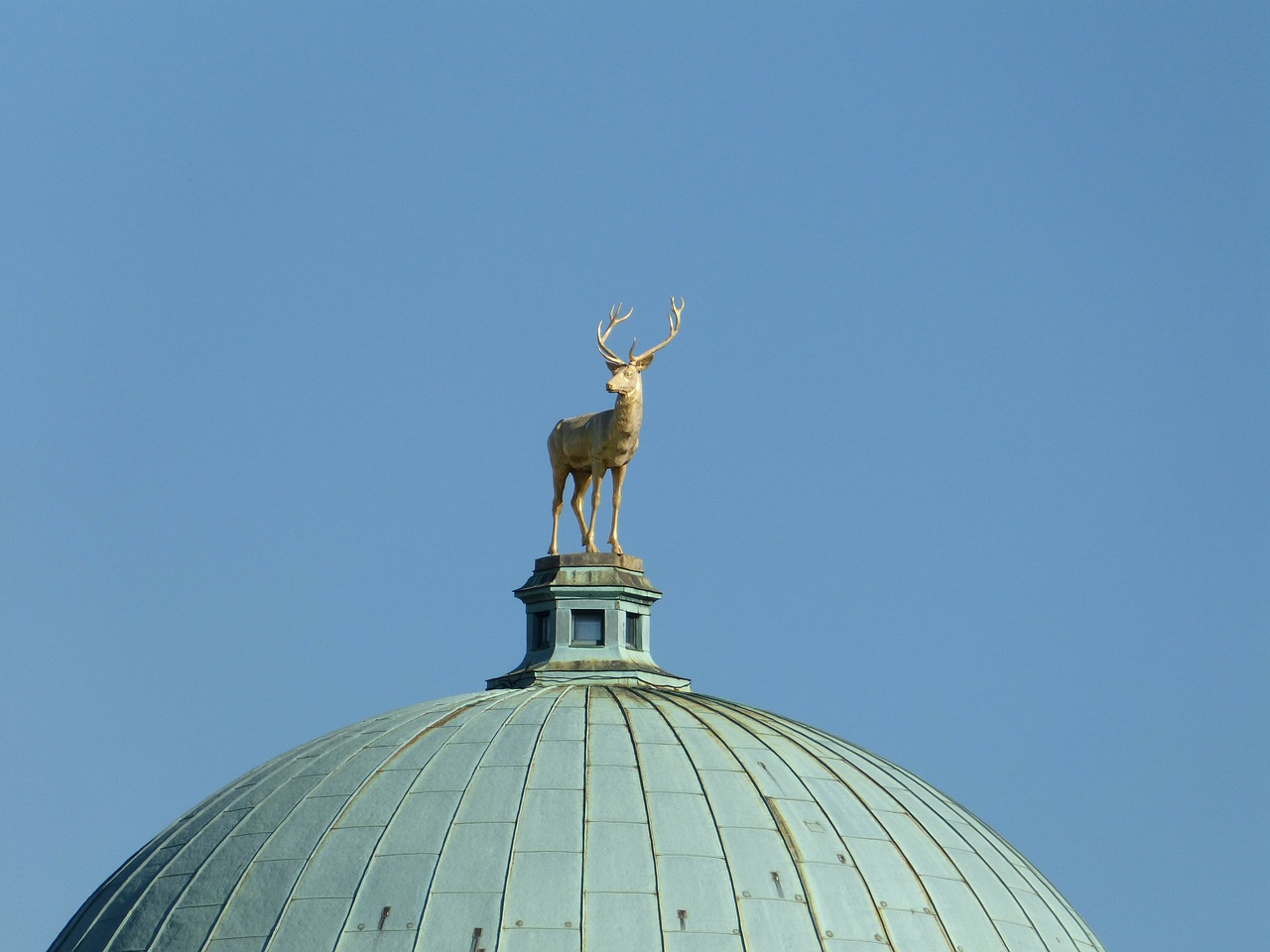 dome,roof,about,hirsch,antler,statue,bronze,gold,sky,blue,free pictures, free photos, free images, royalty free, free illustrations