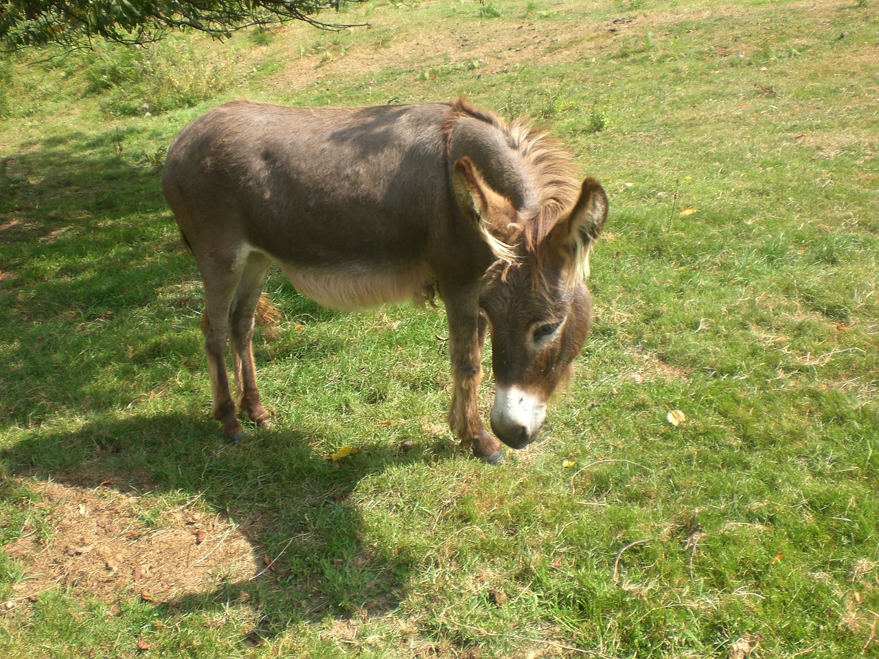 donkey animal rural free photo