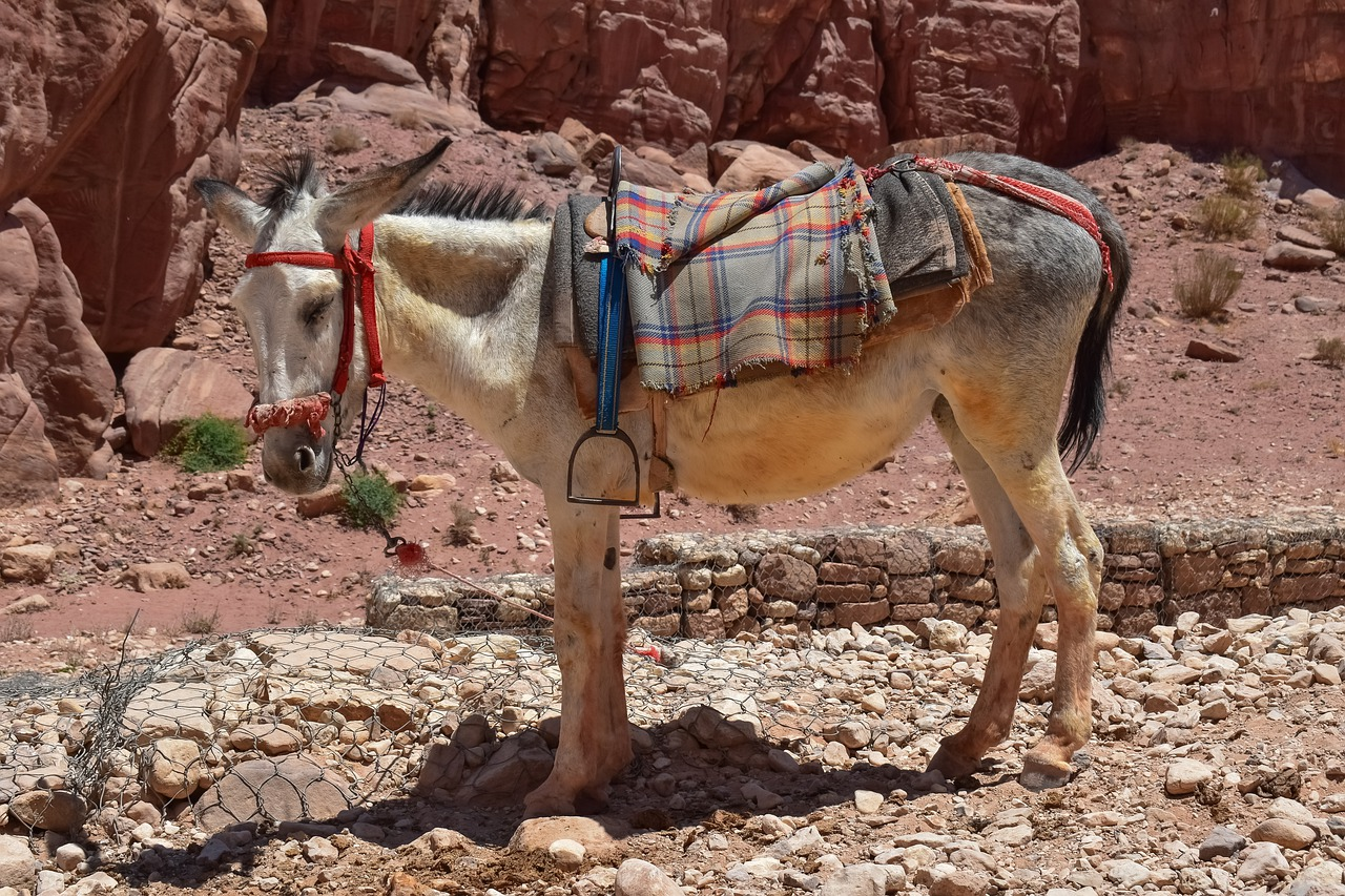 donkey  animal  transportation free photo
