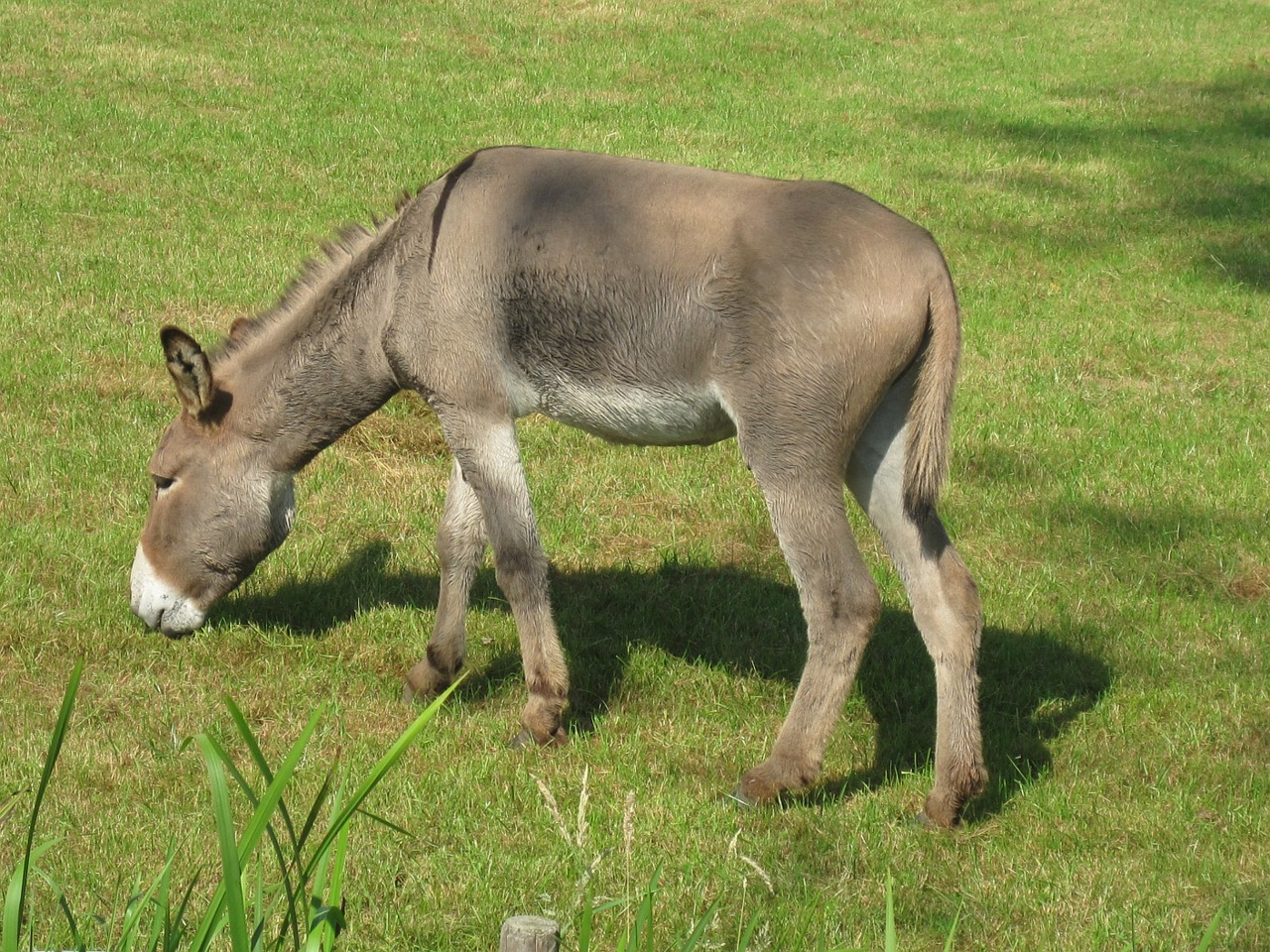 donkey animal farm free photo