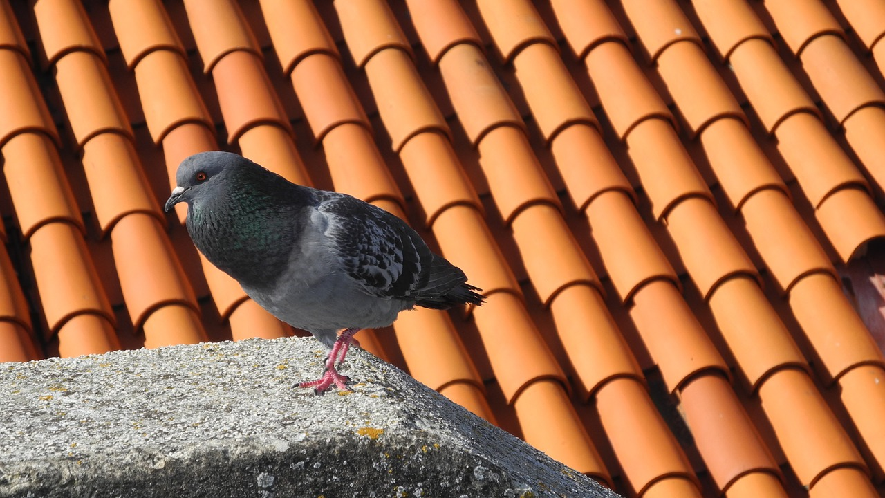 dove roof tile free photo