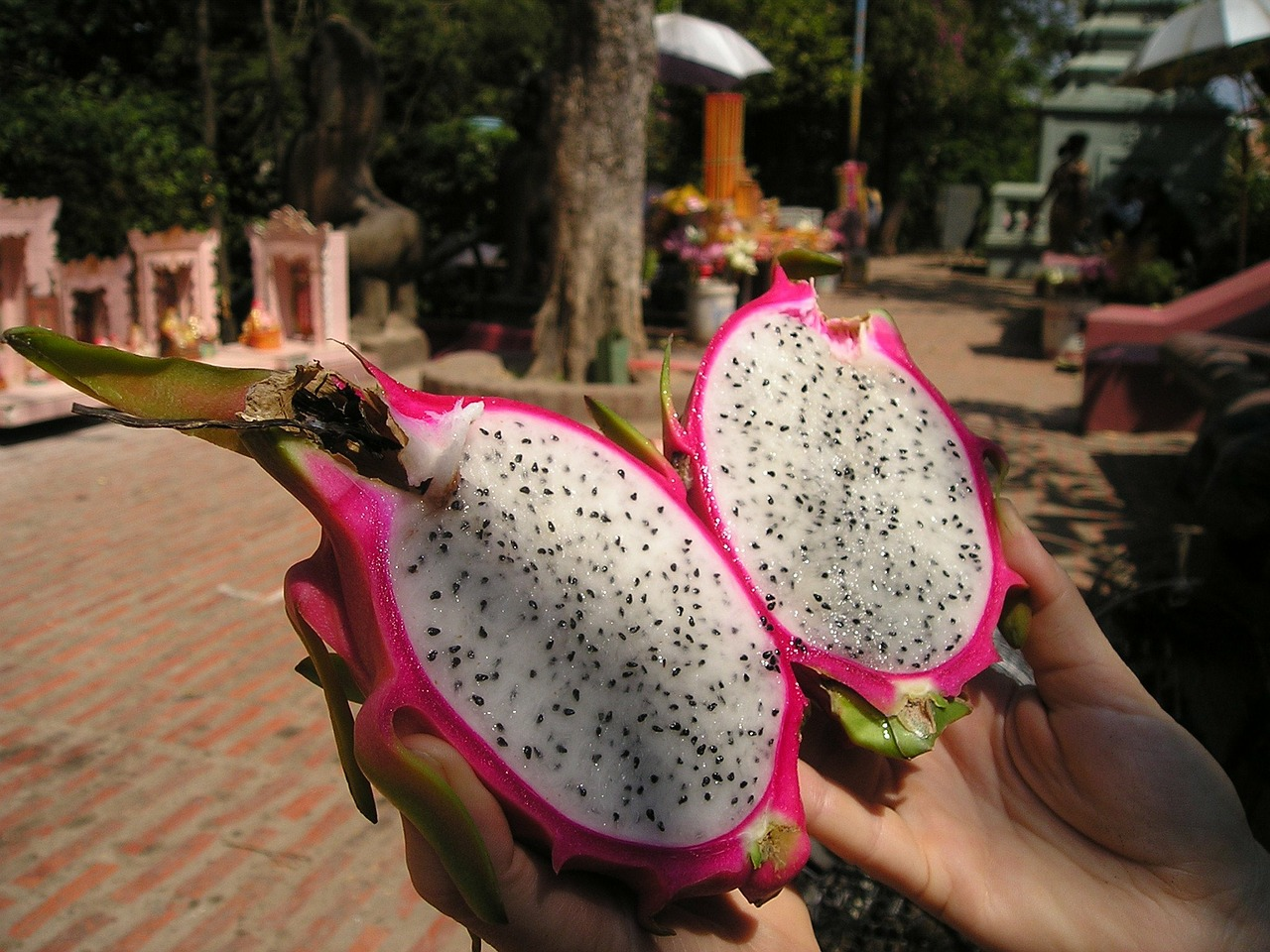 dragon fruit cambodia fruit free photo