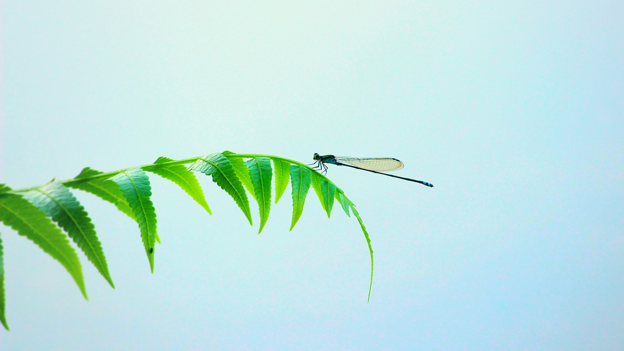 dragonfly insect wings free photo