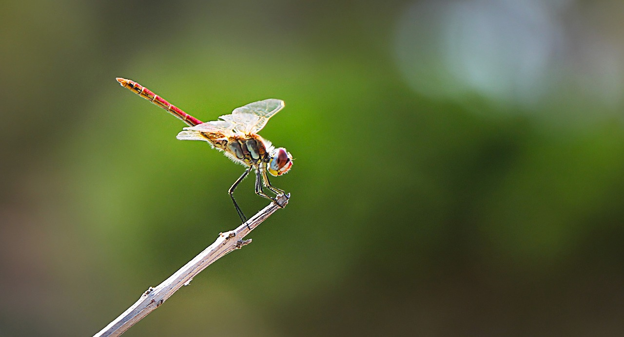 dragonfly insect close free photo