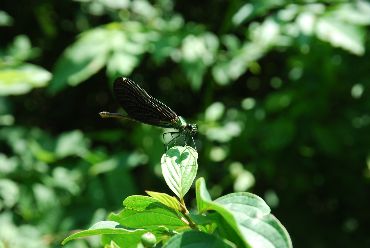 dragonfly green insect free photo