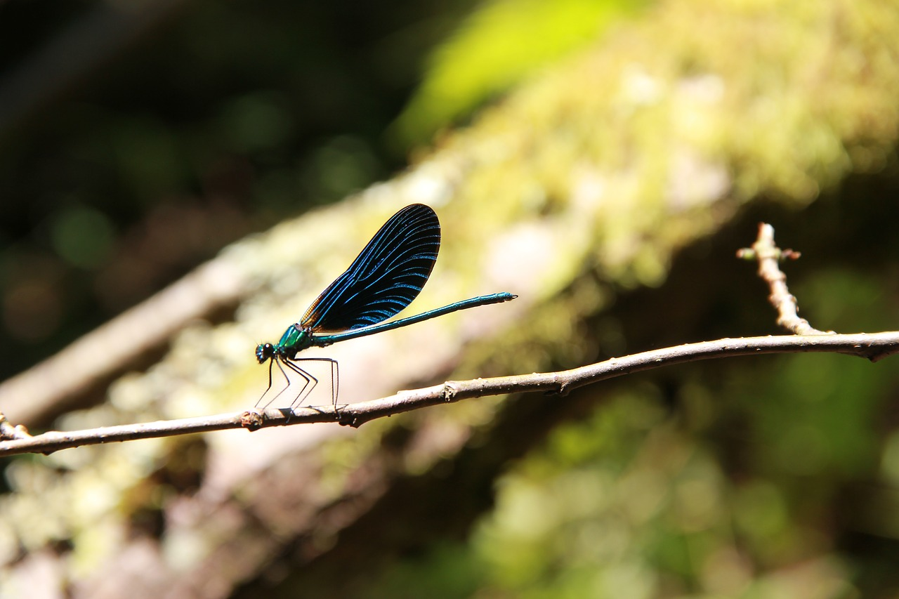dragonfly summer wing free photo