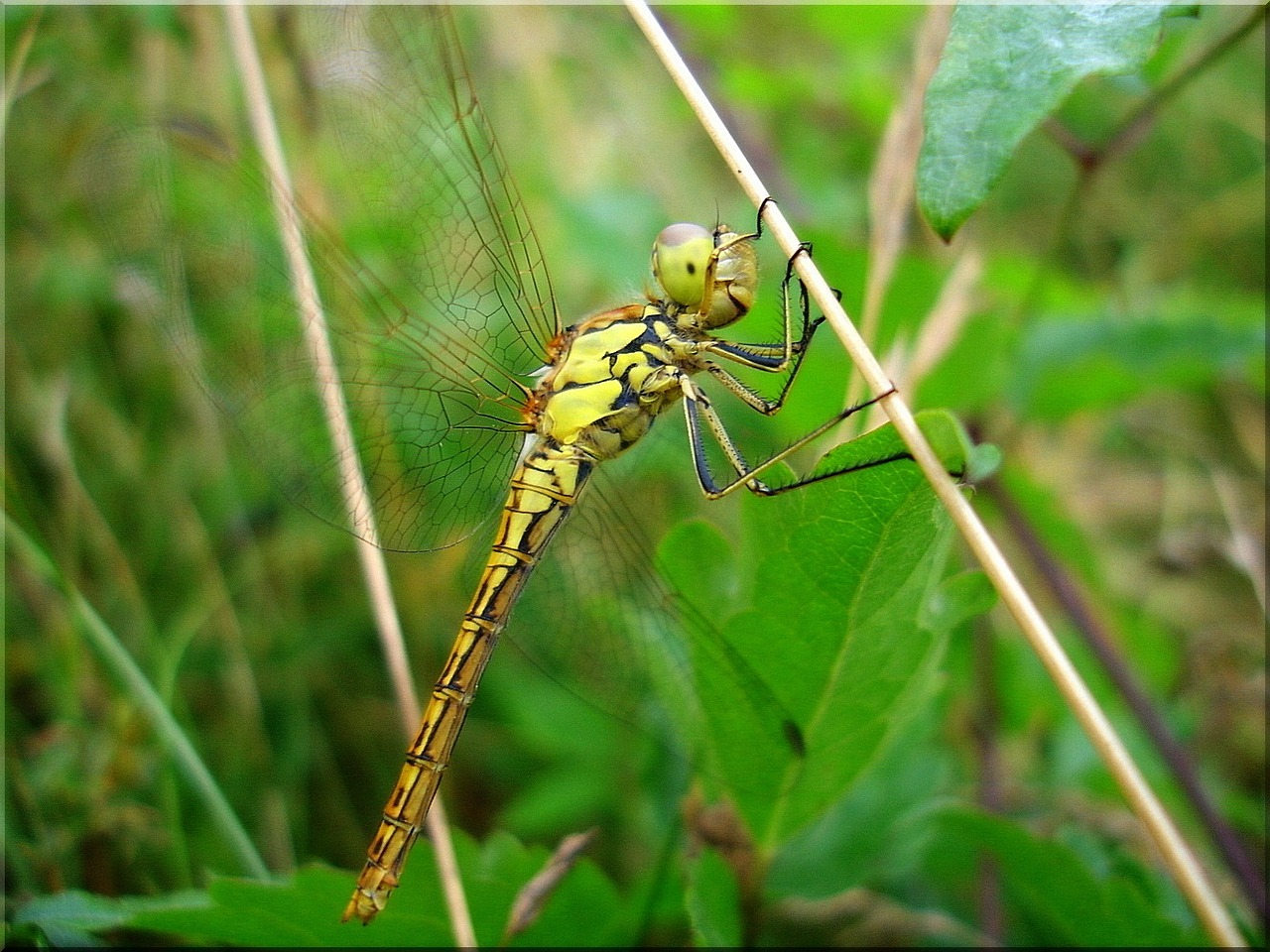 dragonfly meadow summer free picture