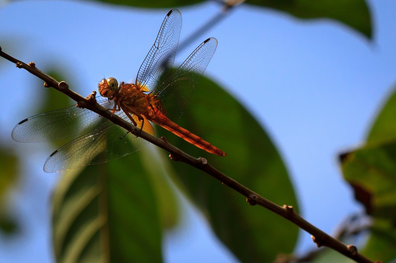 dragonfly nature insect free photo