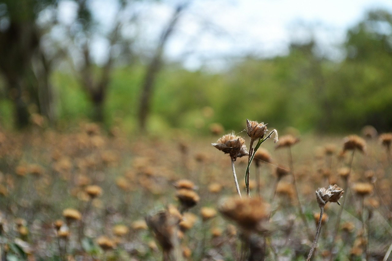 dried flowers dried garden haunted free photo
