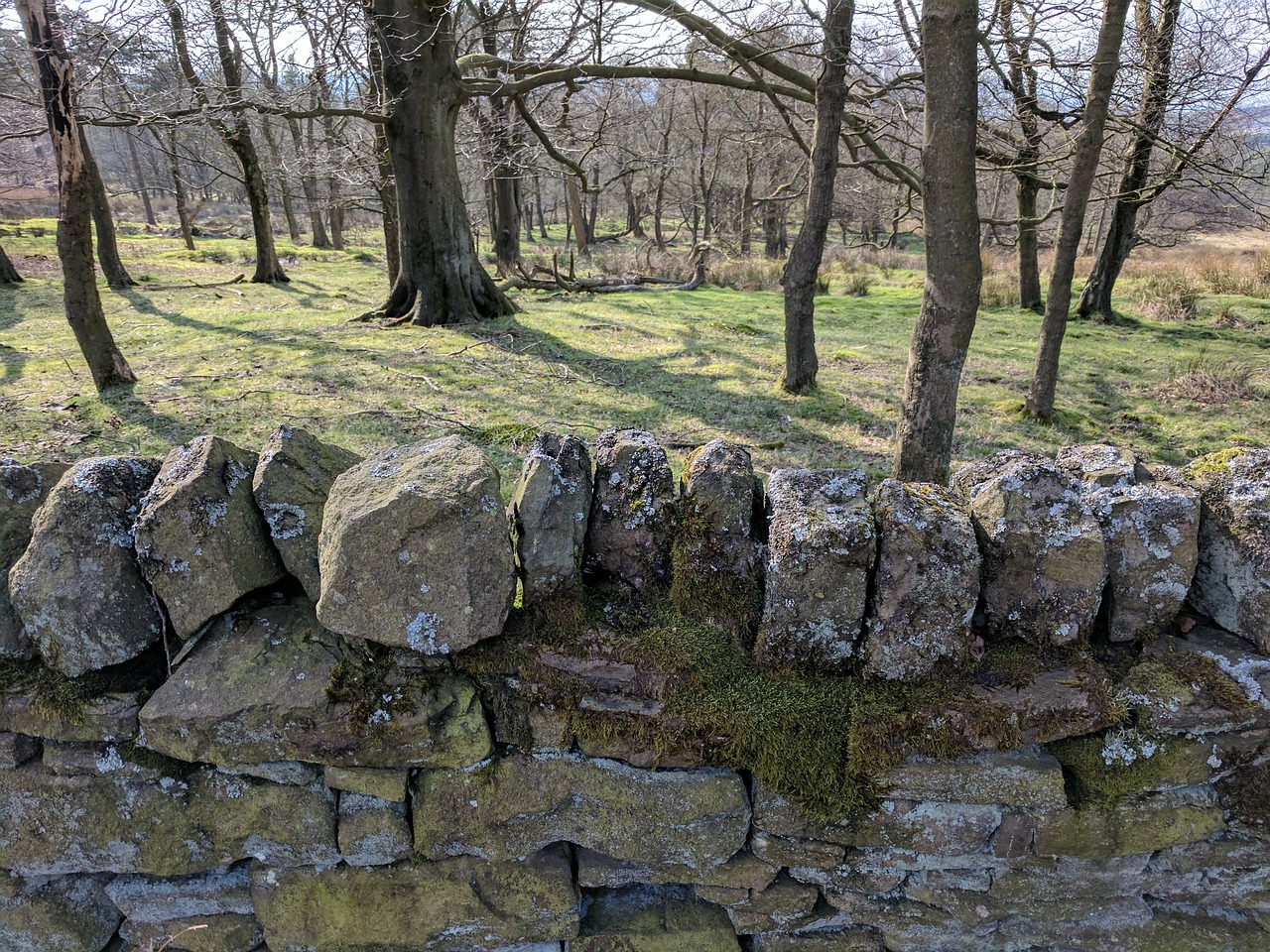 drystone wall,walls,stones,outdoors,uk,derbyshire,longshaw estate,woods,countryside,walks,nature,natural,beauty,free pictures, free photos, free images, royalty free, free illustrations