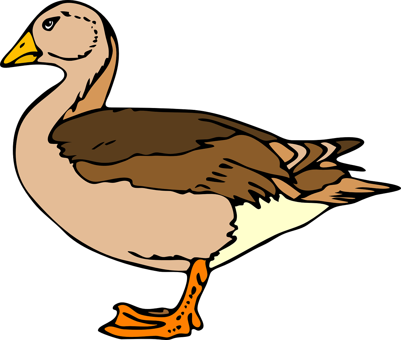 duck standing brown free picture