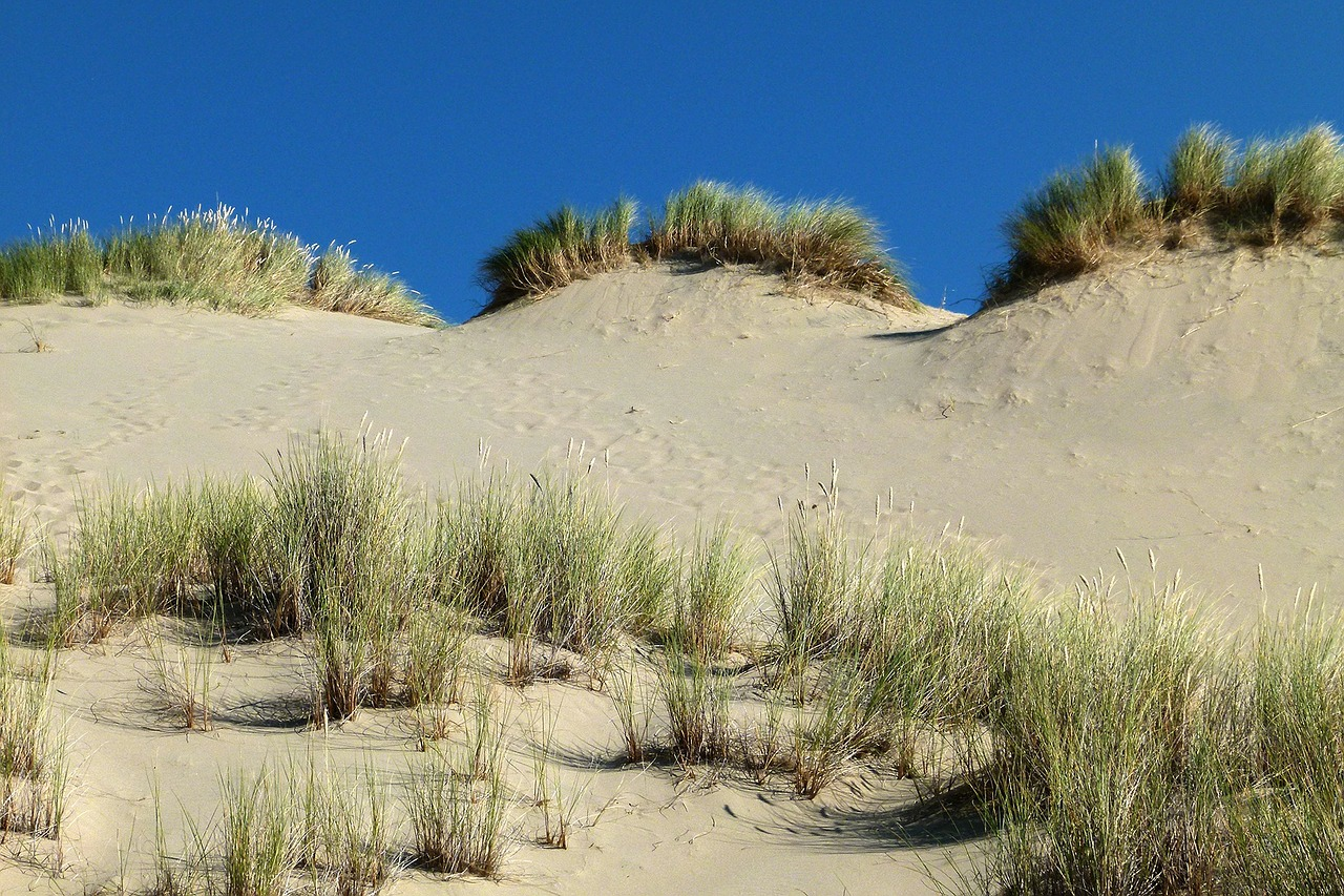 dunes national park oregon usa free photo