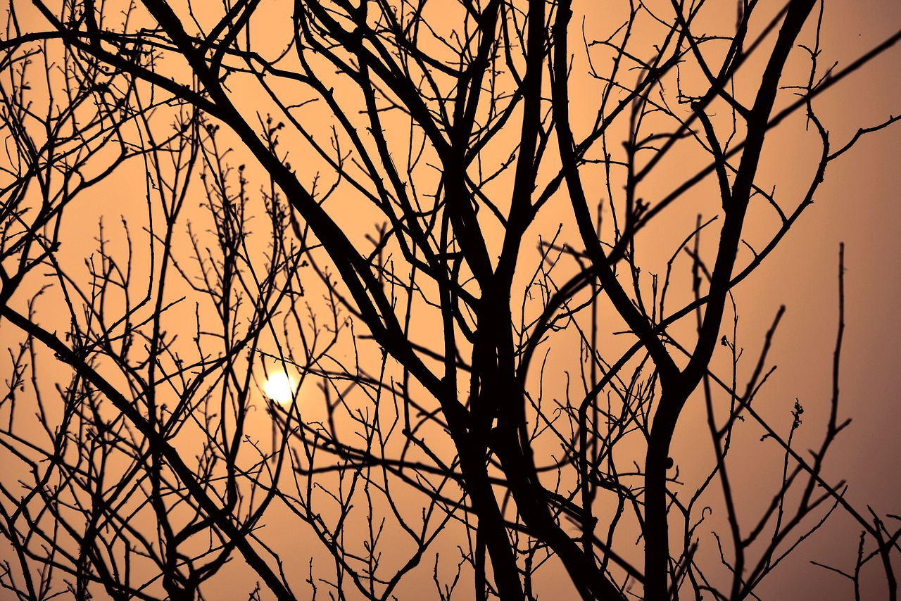 dusk tree by sunshine sunset free photo