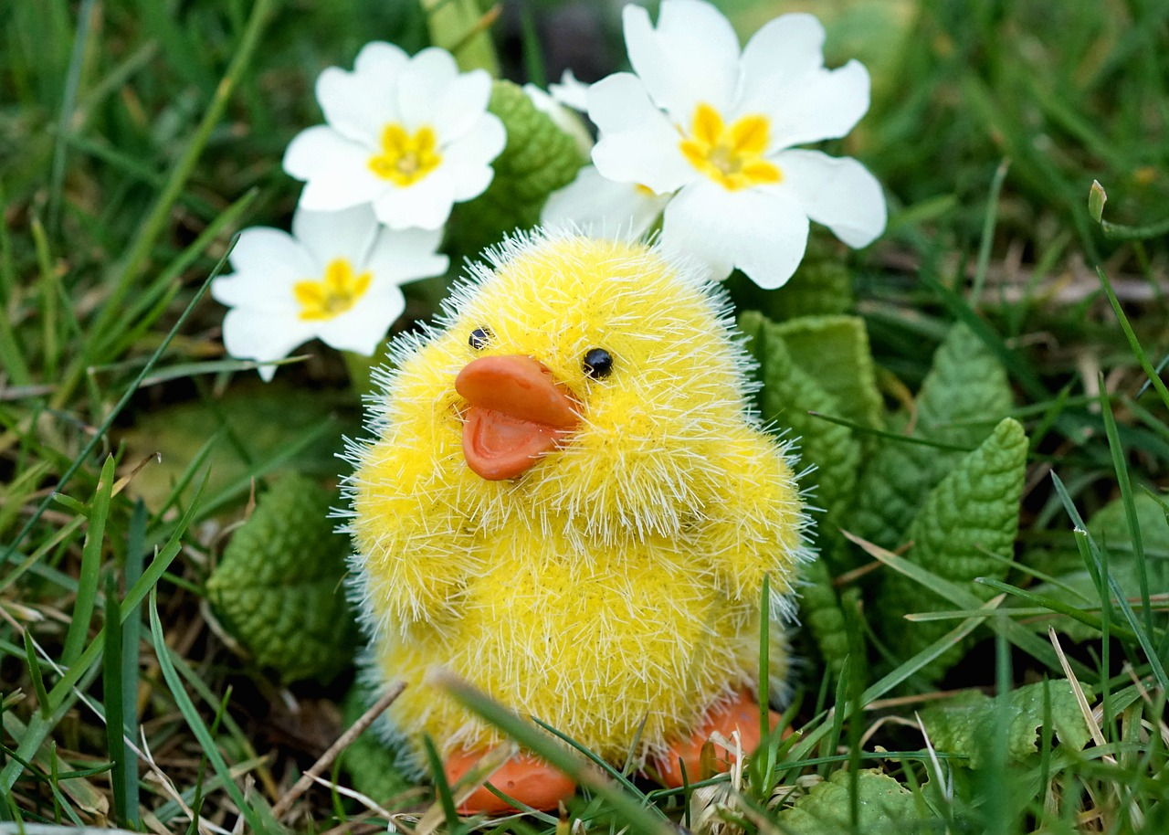 easter chicks easter decoration free photo