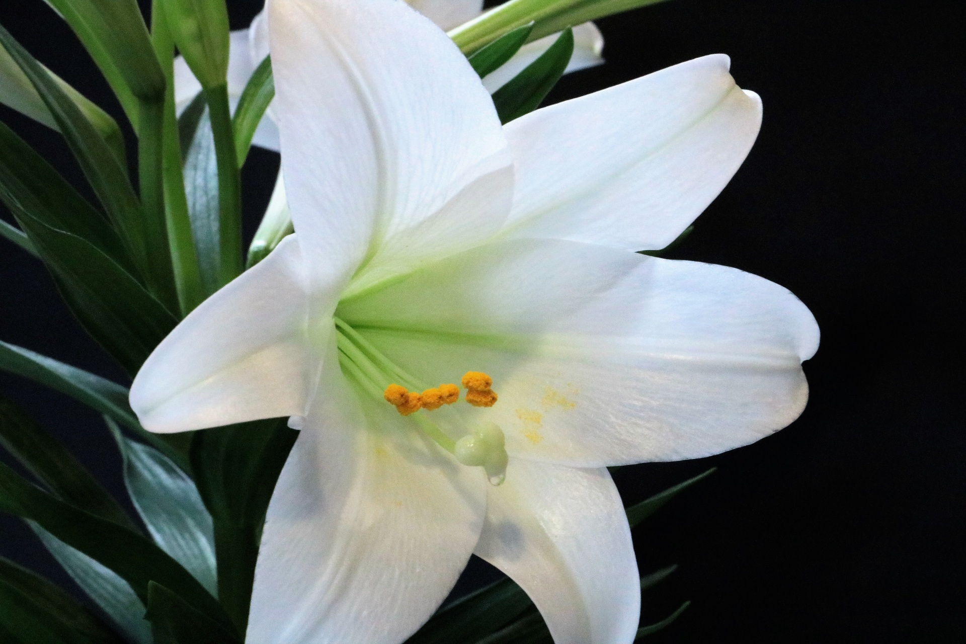 Natureplantsflowersflorawhite Free Photo From Needpix