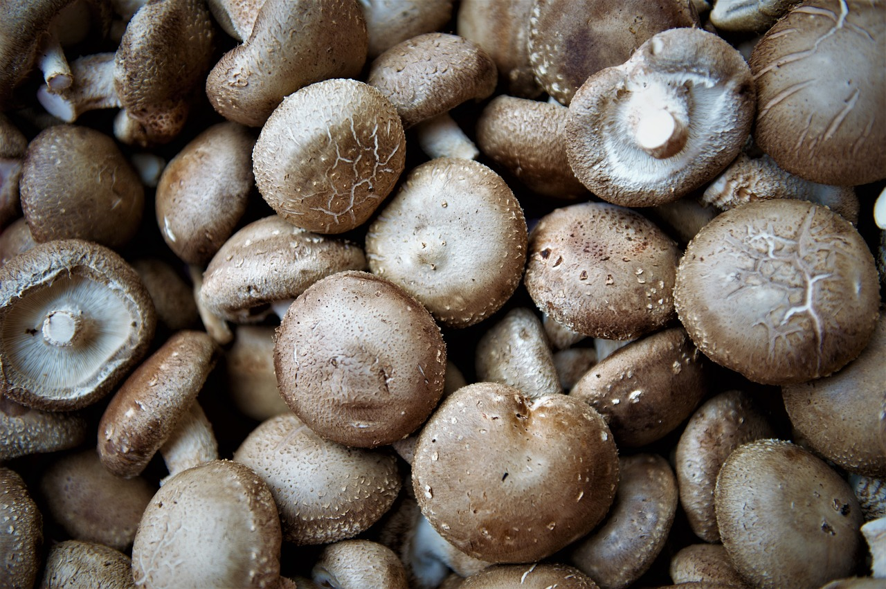 edible mushroom  shiitake mushrooms  healthy free photo
