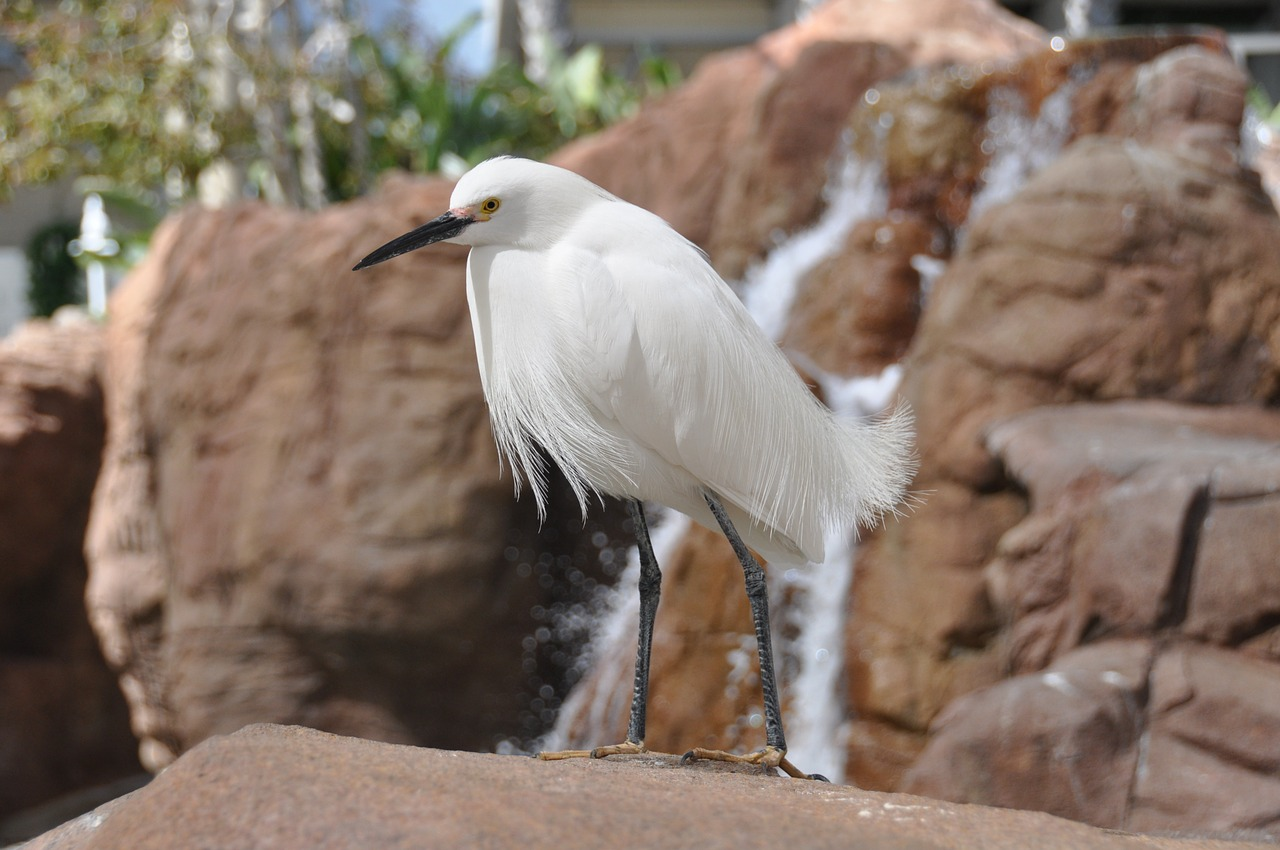 egret bird white free photo
