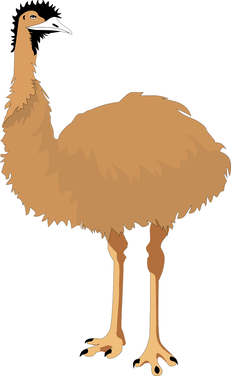 emu,flightless,bird,wings,australia,neck,stare,free vector graphics,free pictures, free photos, free images, royalty free, free illustrations, public domain