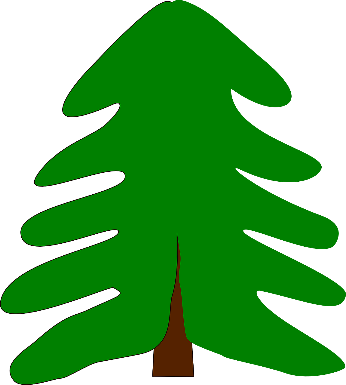 evergreen spruce fir free photo