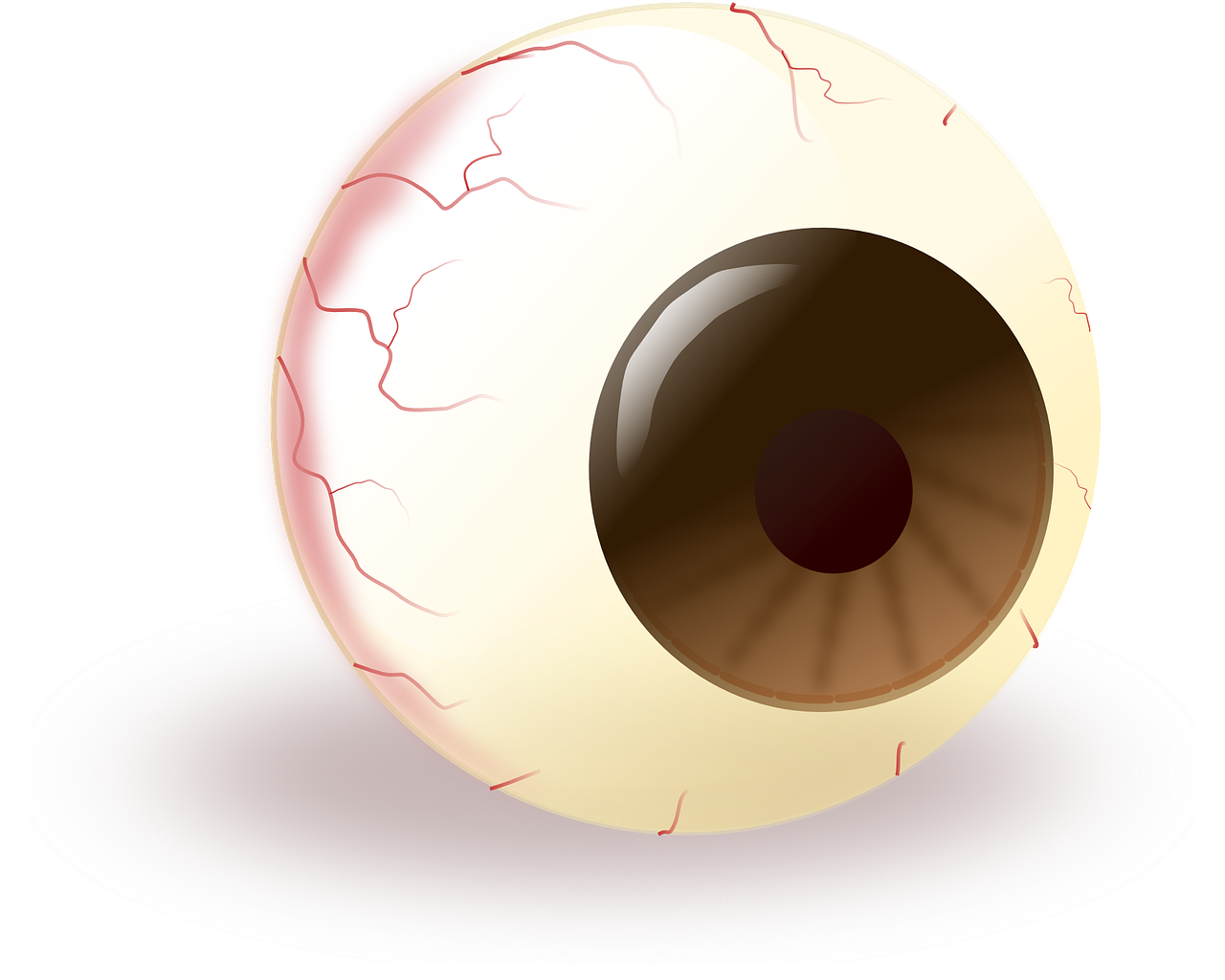 eye eyeball brown free photo