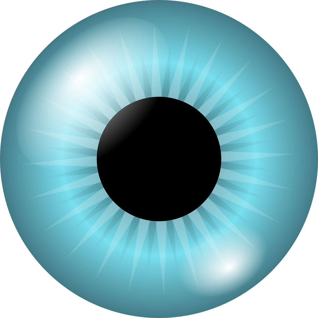 eyeball,iris,pupil,blue,eyes,vision,view,look,see,eyesight,color,optic,retina,cornea,focus,visual,free vector graphics,free pictures, free photos, free images, royalty free, free illustrations, public domain