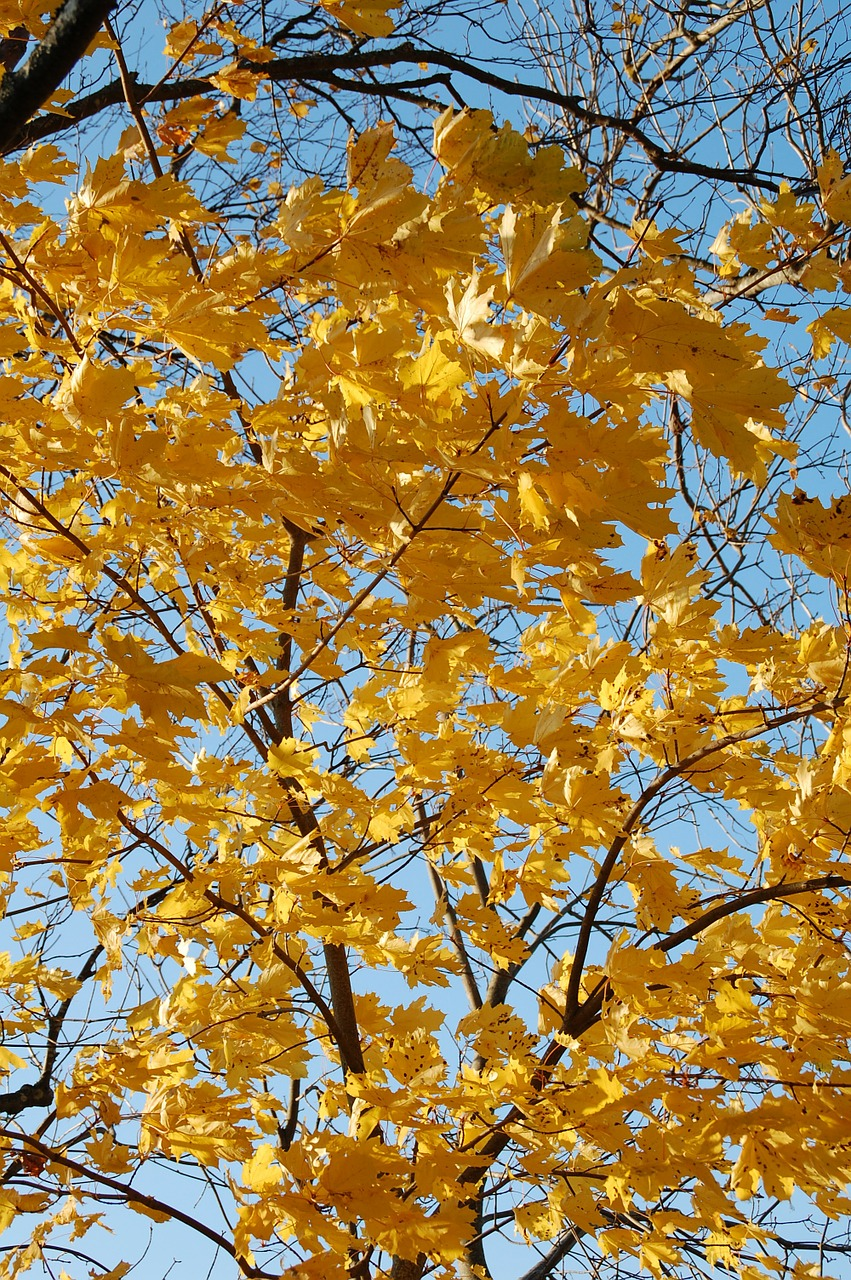 fall leaves autumn free photo
