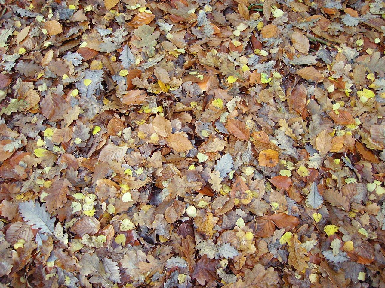 Fall foliage,leaves,fall color,sheet rain,transience - free photo ...