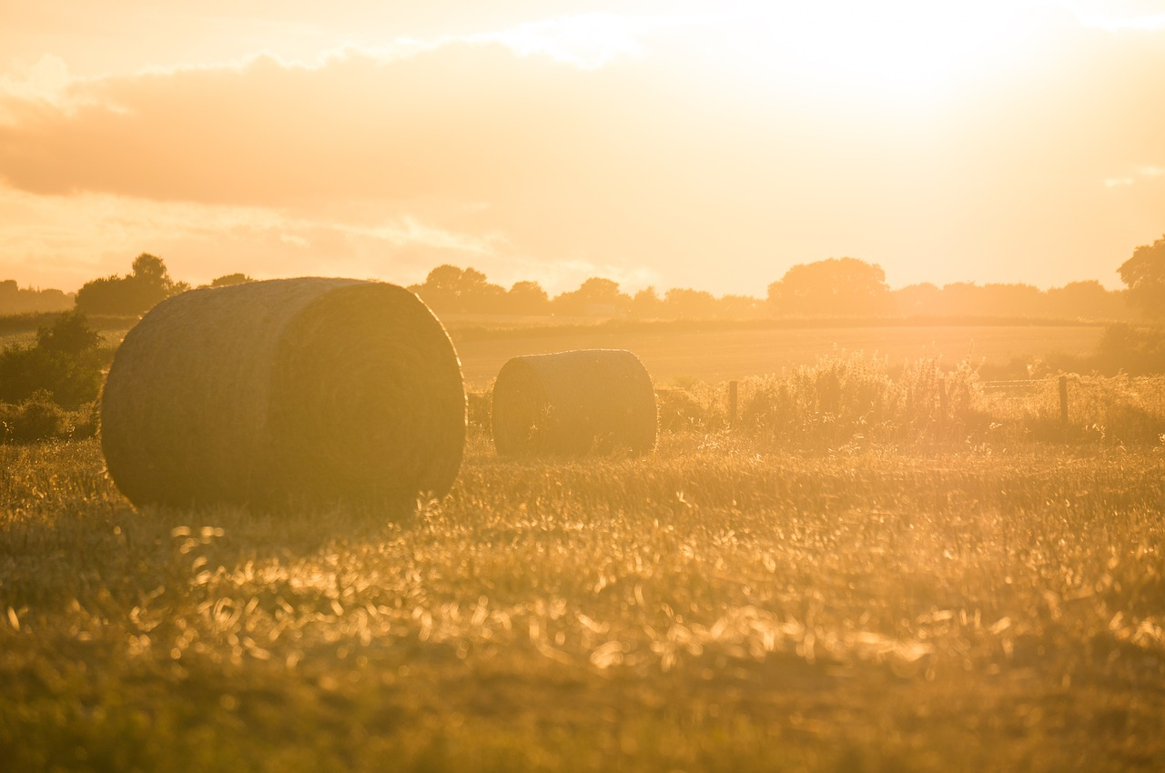 farm,field,hay,agriculture,grass,sunshine,sunrise,landscape,nature,free pictures, free photos, free images, royalty free, free illustrations