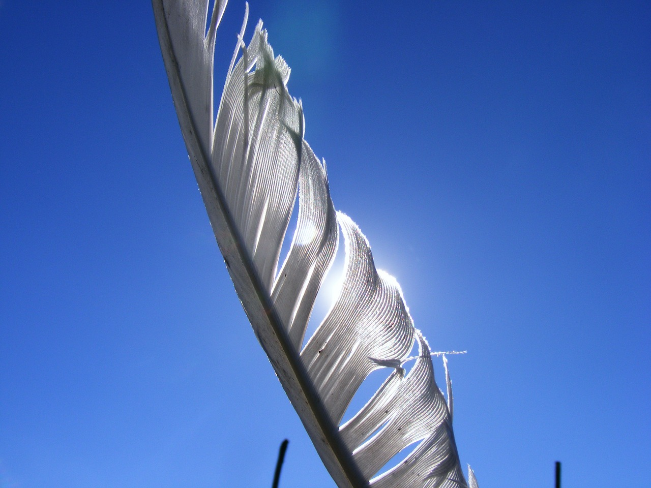 feather sunlight white free photo