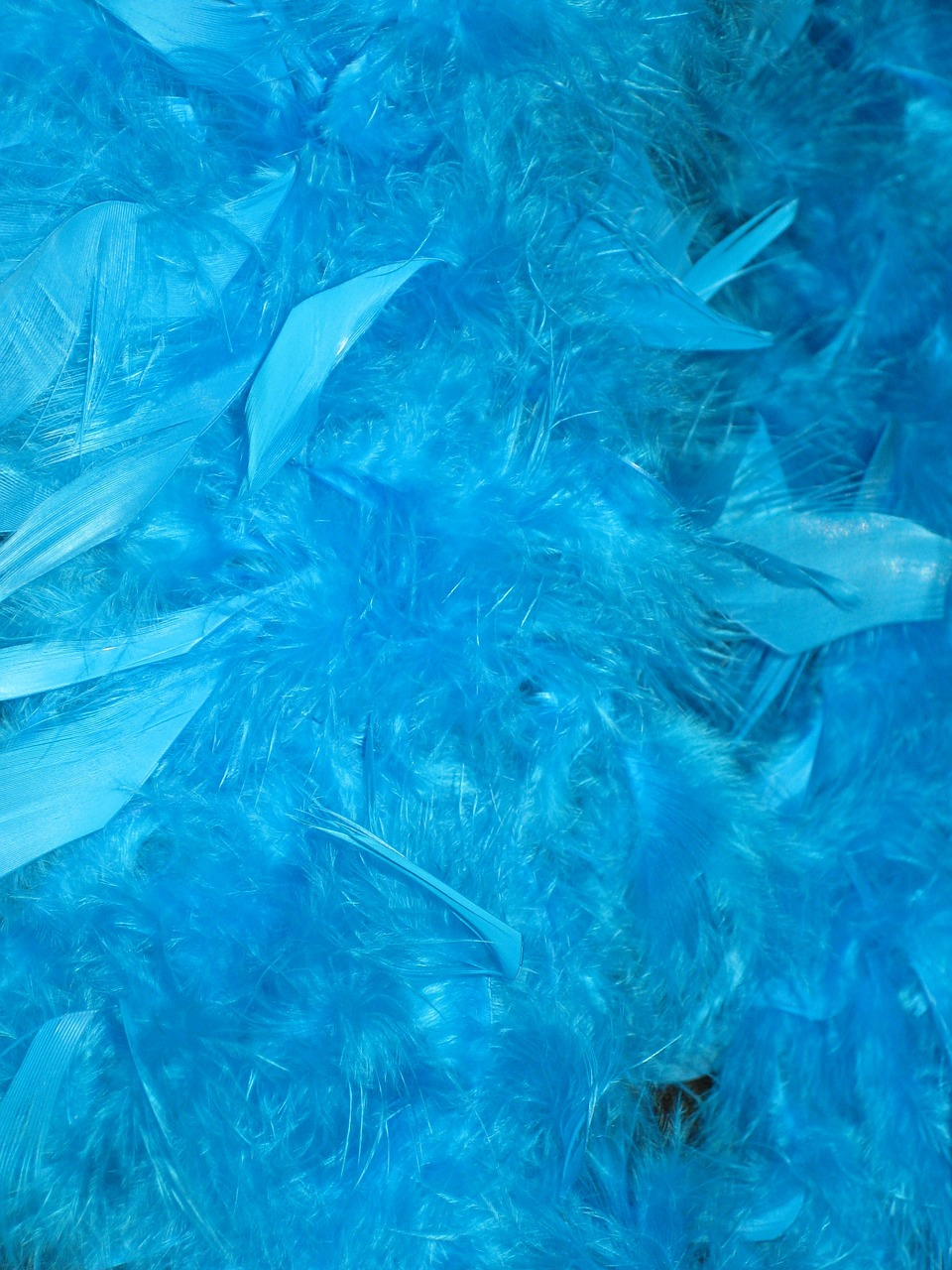 feather boa boa blue free photo