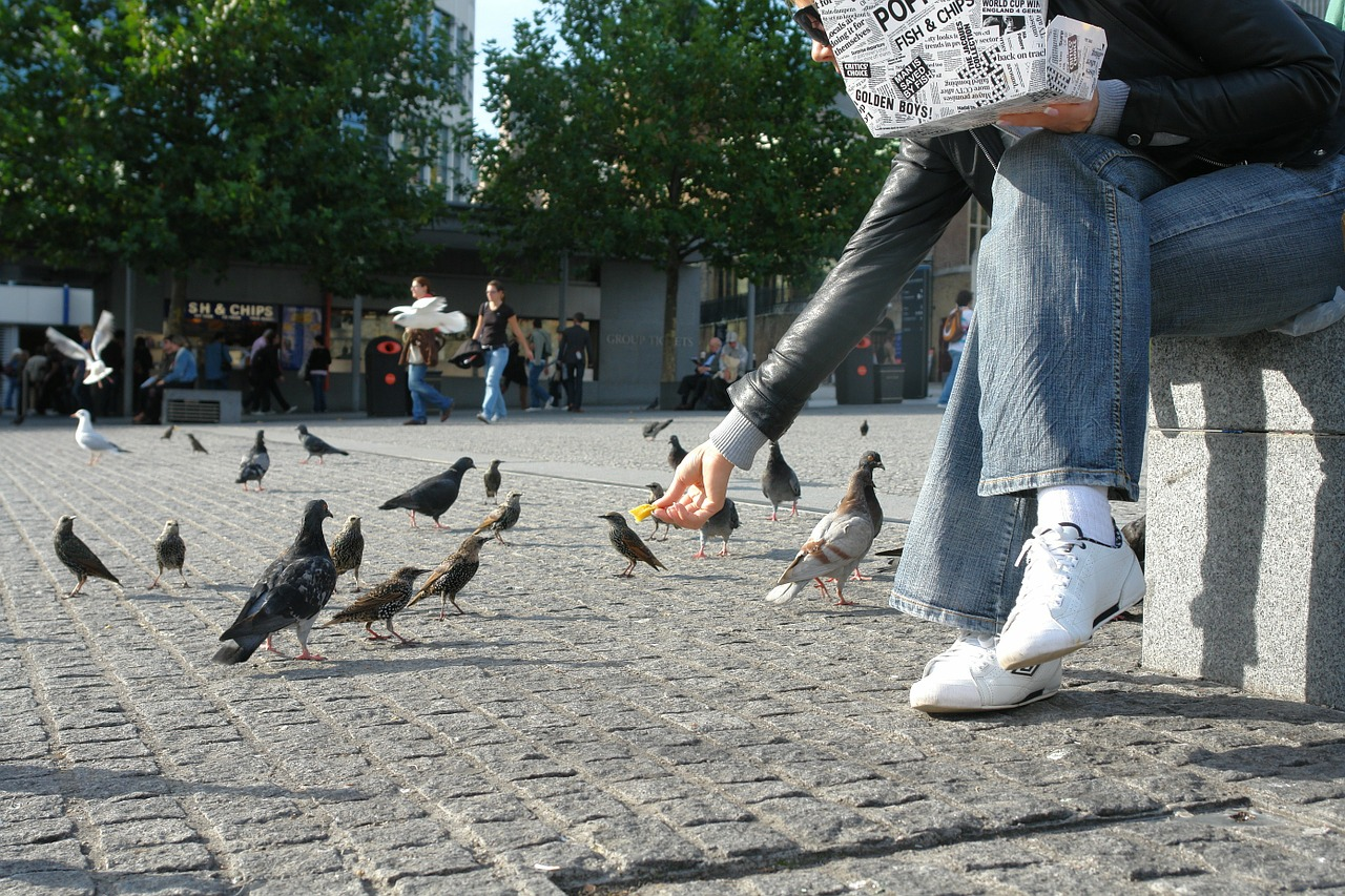 feeding birds pigeons french fries free photo