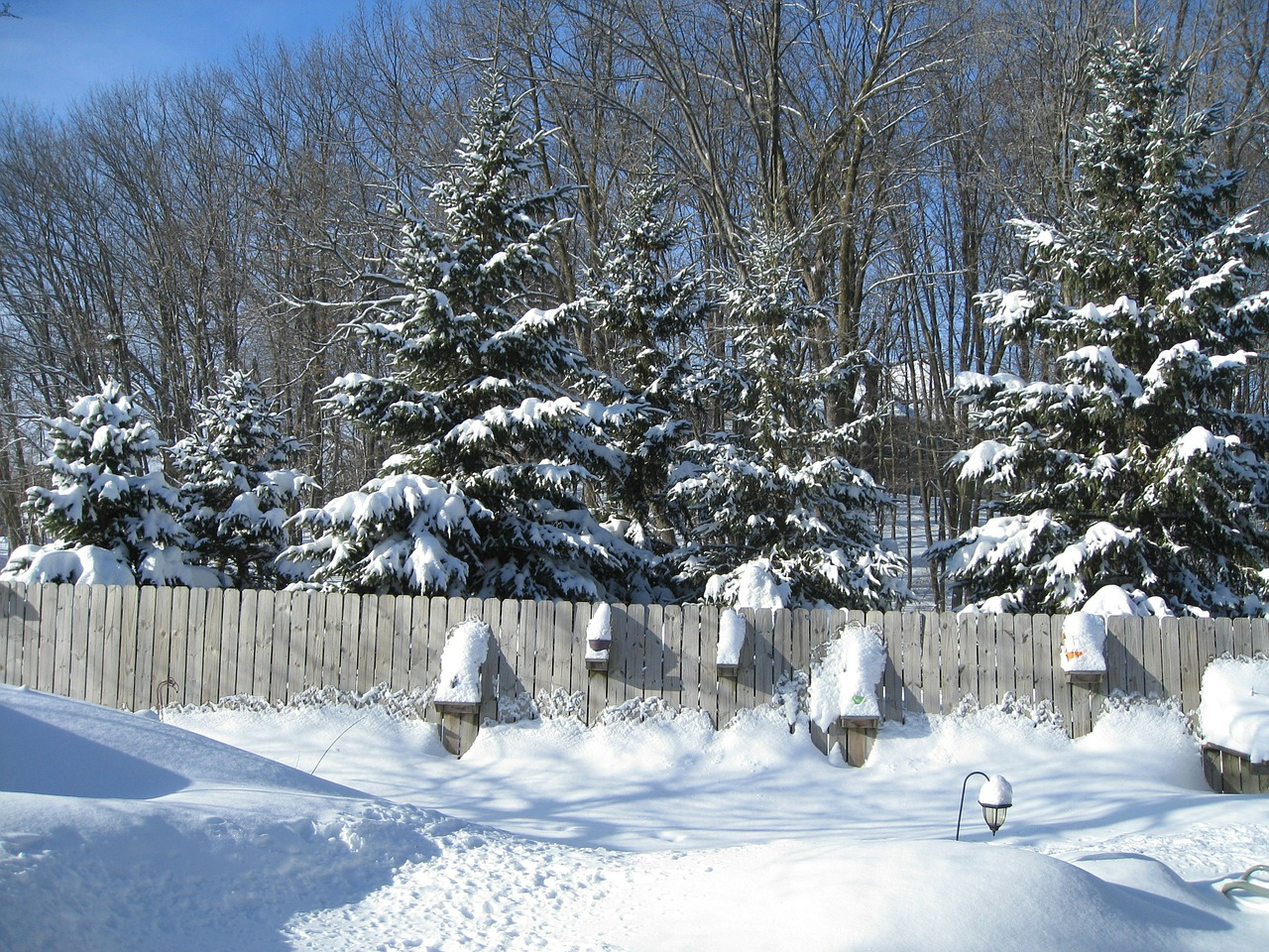 fence,woods,season,white,cold,ice,snow,winter,frost,snowy,frozen,outdoor,weather,snowfall,cool,frosty,snowstorm,blizzard,snow-storm,free pictures, free photos, free images, royalty free, free illustrations, public domain