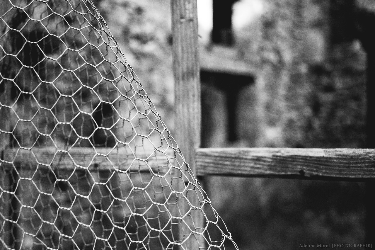 fence closing window free photo