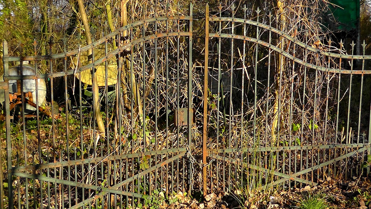 Feral Garden,garden,wild,door,old,run Down,plant,