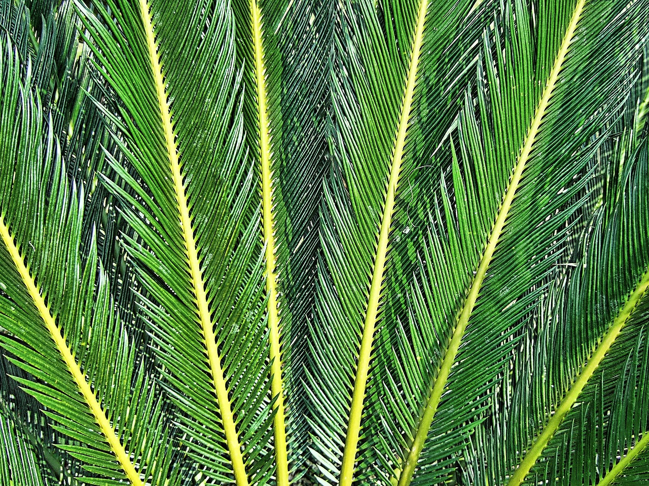 fern,texture,rays,green,leaves,needles,thailand,free pictures, free photos, free images, royalty free, free illustrations