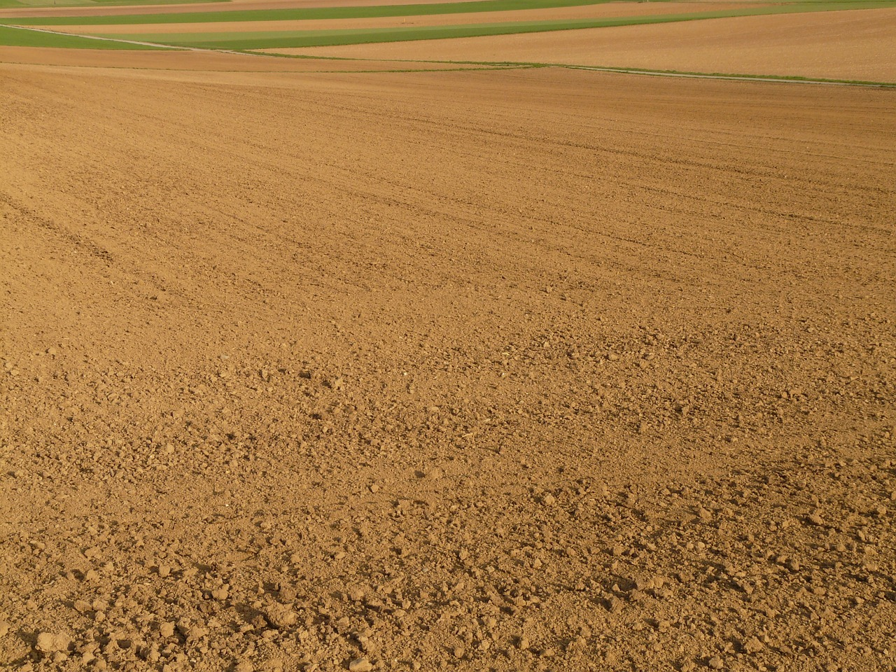 field arable agriculture free photo