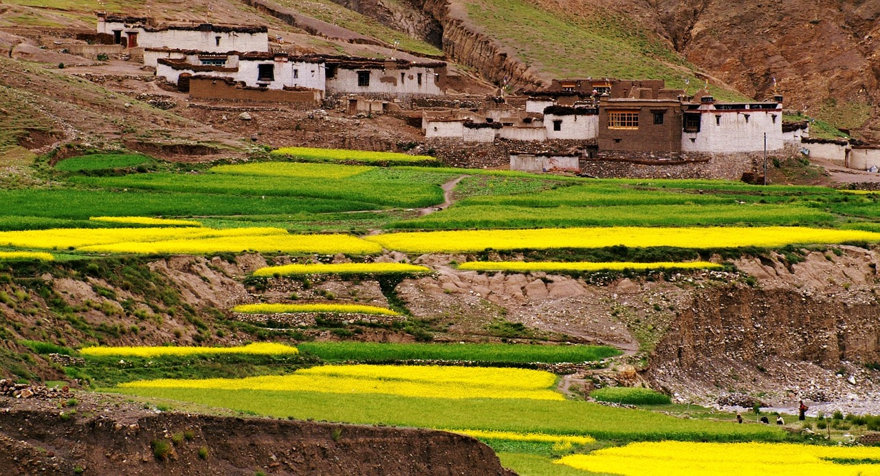 fields culture tibet free photo