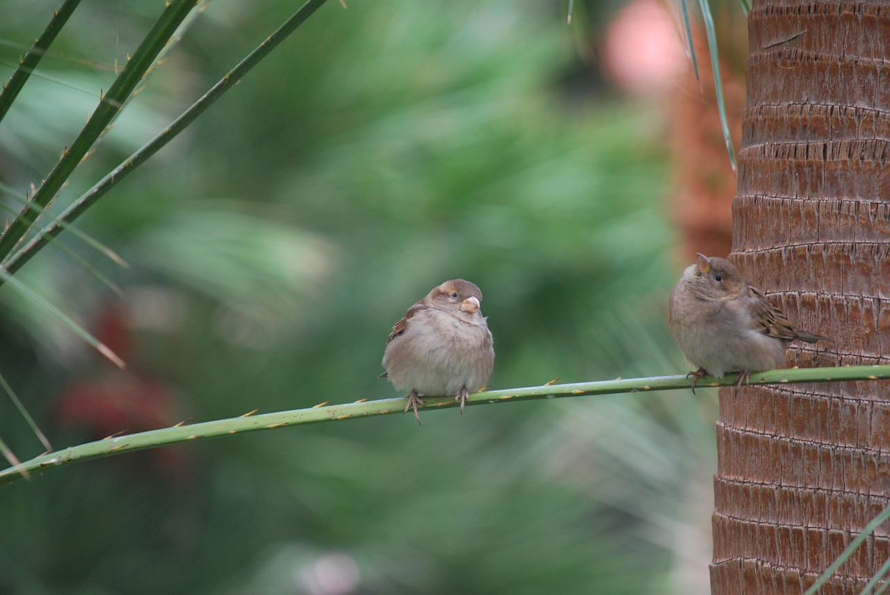 finches bird wildlife free photo