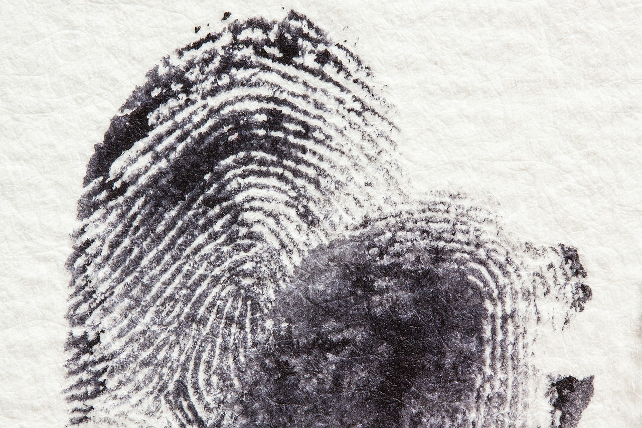 fingerprint daktylogramm papillary free photo