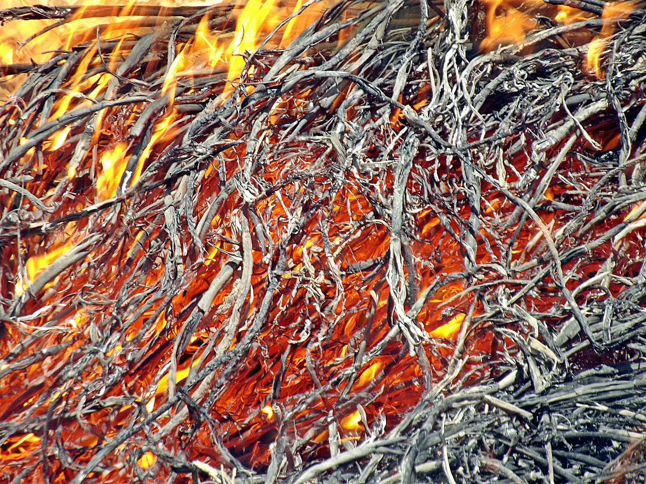 fire glow reed free photo