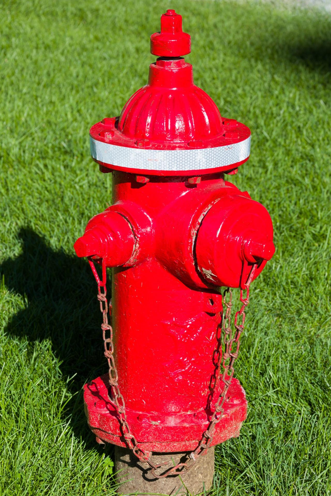 Пожарница трава фото база прям