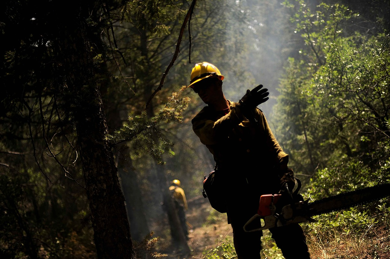 firefighter forest fire hot free photo