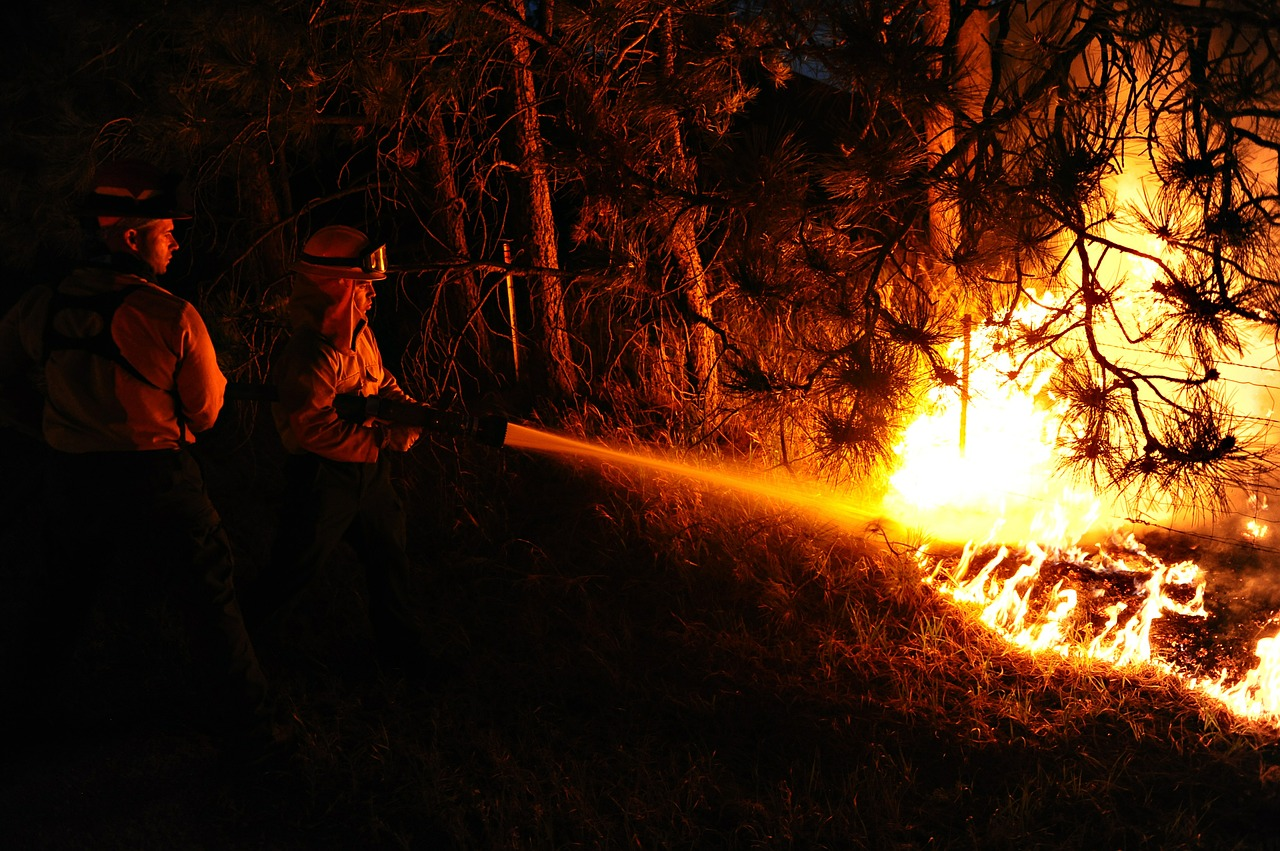 firefighters forest fire flames free photo