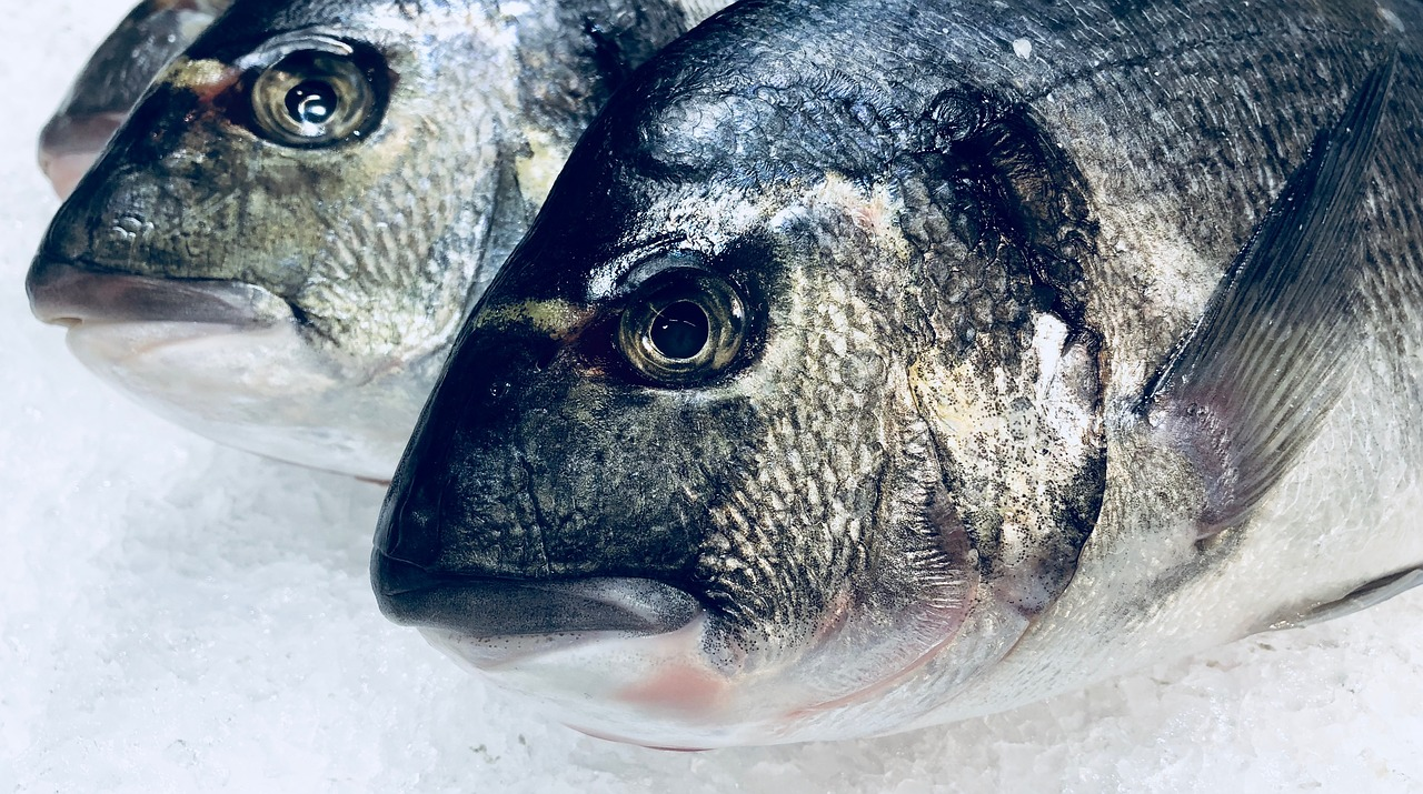 fish, food, nutrition, kitchen, eat, sea, healthy, chilled, fresh, scale, sea bream, sea animal, freshly caught, on ice,free pictures, free photos, free images, royalty free, free illustrations, public domain
