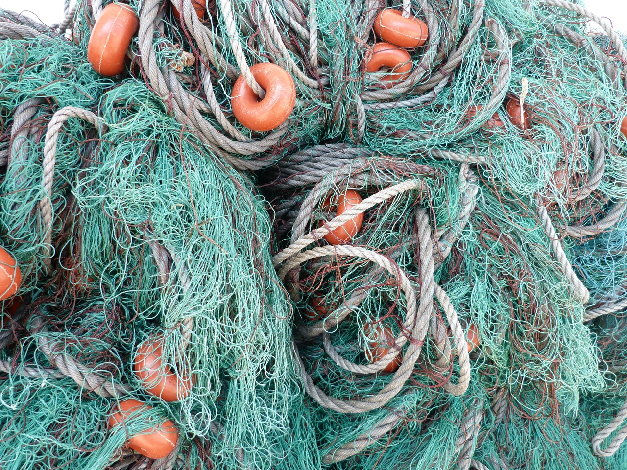 fishing nets fishing net fishing free photo