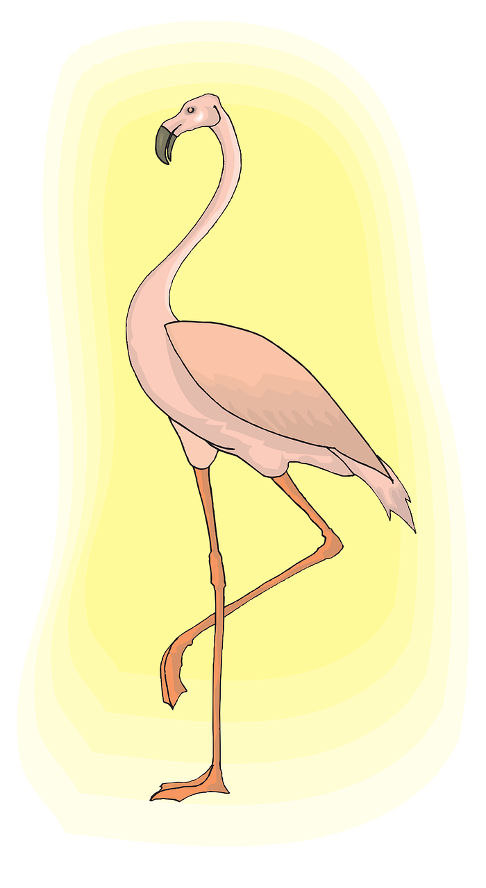 flamingo light pink free photo