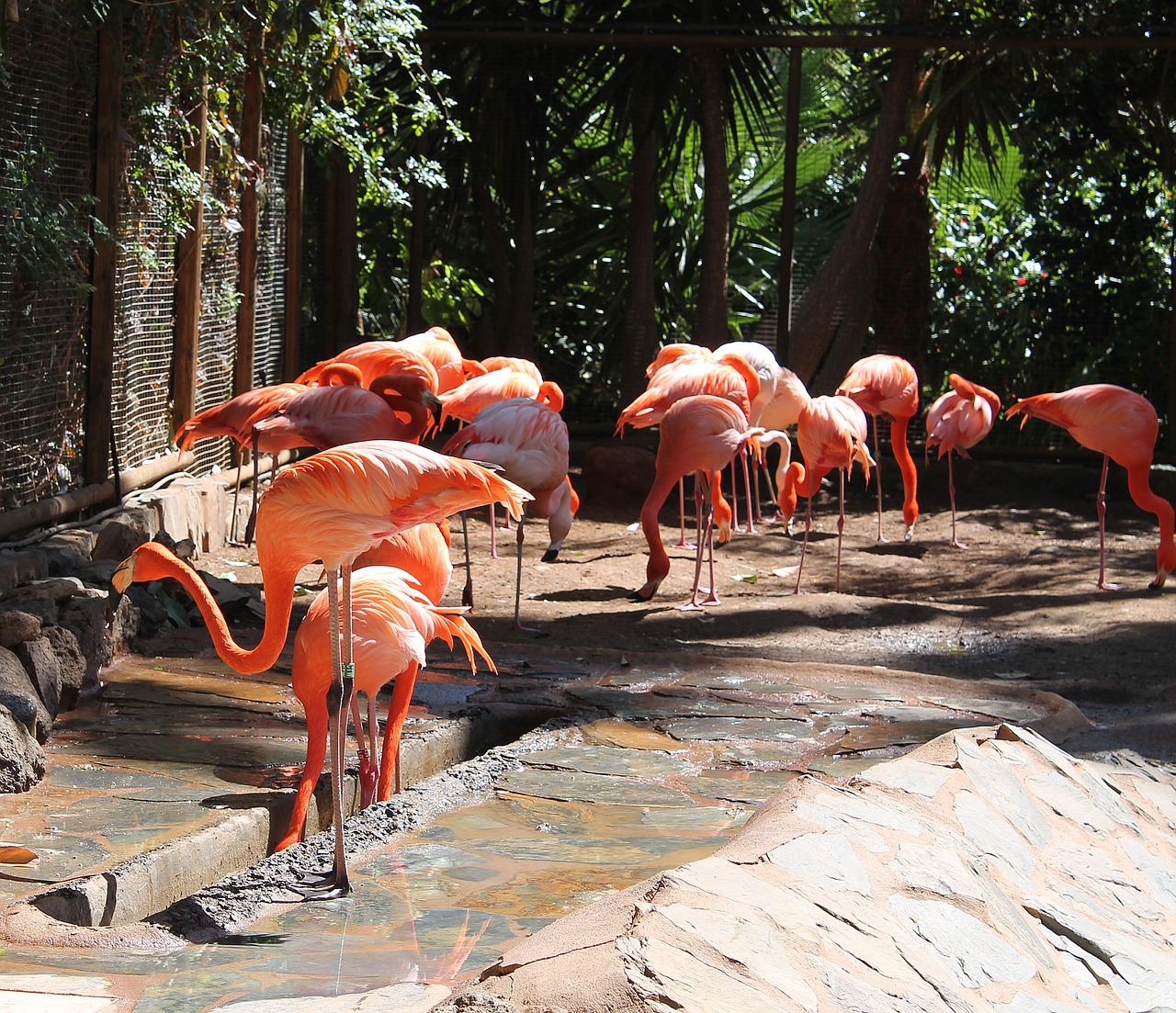 flamingos birds expensive free photo